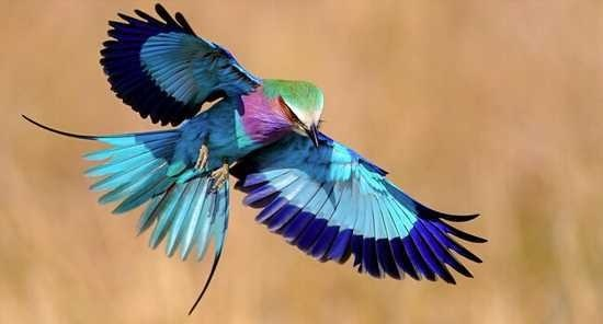 世界上最美丽的鸟图片大全